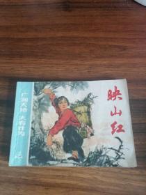 映山红(广阔天地 大有作为)