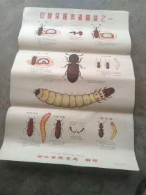 中国储粮害虫图说之一,浙江粮食局翻印,一九七三年