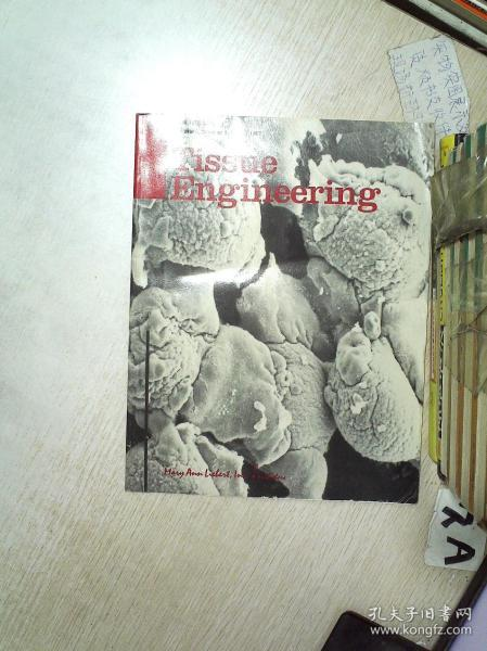 TISSUE ENGINEERING 1997 3 组织工程1997 3 (08)