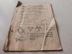 同翅目分科检索表【37--58页】