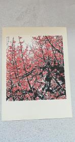 文革宣传画:中国画俏不争春——32.7*23.9cm,关山月作,95品。