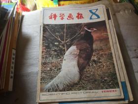 科学画报1981-8