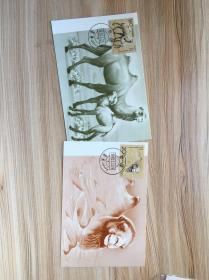 MC13,二十五届奥运会,极限明信片。MC15,野骆驼,2全。极限明信片,集邮总公司。