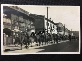 """【照片珍藏】民国早期山东(青岛或济南?)街道上行进的骆驼队及沿街建筑、商铺等景象,可见""""木棉洋行""""、""""大同泰""""等商号。影像清晰、内容少见、甚为难得"""