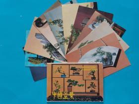 集邮明信片收藏~~~~~~~~~中国盆景 一套10枚【汉英日语,北京建设杂志社出版】