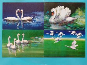 集邮明信片收藏~~~~~~~~~天鹅明信片 一套4枚【北京市邮政局】