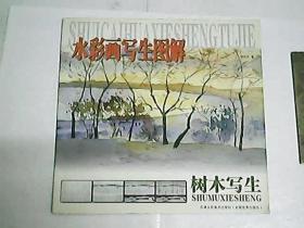 水彩画写生图解  树木写生