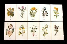 古董画片:英国古老的博坦尼卡艺术10件套(一套出)考虑到现代印刷品一张都是上百上千的,这款套装无论是拆卖还是自用是相当划算