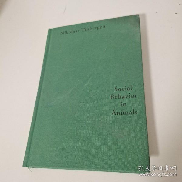 动物的社会行为