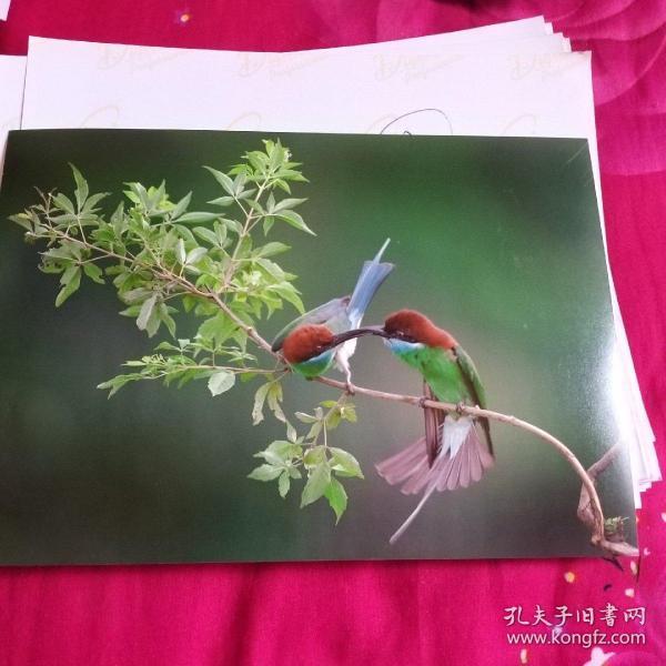 中国黄冈风情大别山全国摄影大展参赛入选作品原照片《斗嘴》
