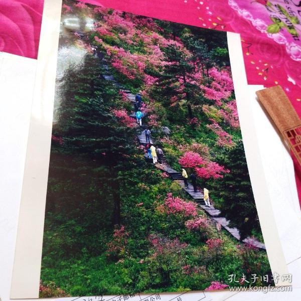 中国黄冈风情大别山全国摄影大展参赛入选作品原照片《只在此山中红深不知处》