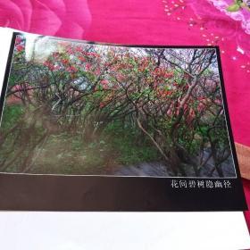 中国黄冈风情大别山全国摄影大展参赛入选作品原照片《花间碧树隐幽径》