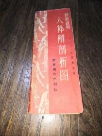 人体解剖折图(经折本)
