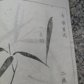 旧线装木版画谱   竹谱  一册。失封底。39个筒子页。几页有套印。个别有虫蛀。封面无标签,推测是某套书中一本。传统画竹套路,尽在此书。