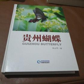 贵州蝴蝶.