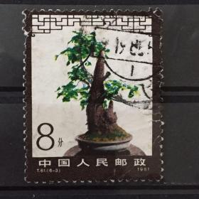 T61 盆景艺术邮票 (6-3)信销票一枚 有损实图