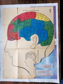 民国时期的颅相学彩色插图(脑性理机能四十二性能图)