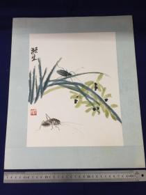 解放后,约70年代,水印 :齐白石虫草。