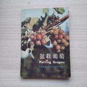 《盆栽葡萄》