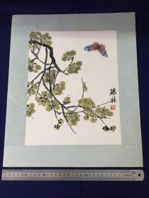 解放后,约70年代,水印 :齐白石虫草 ,