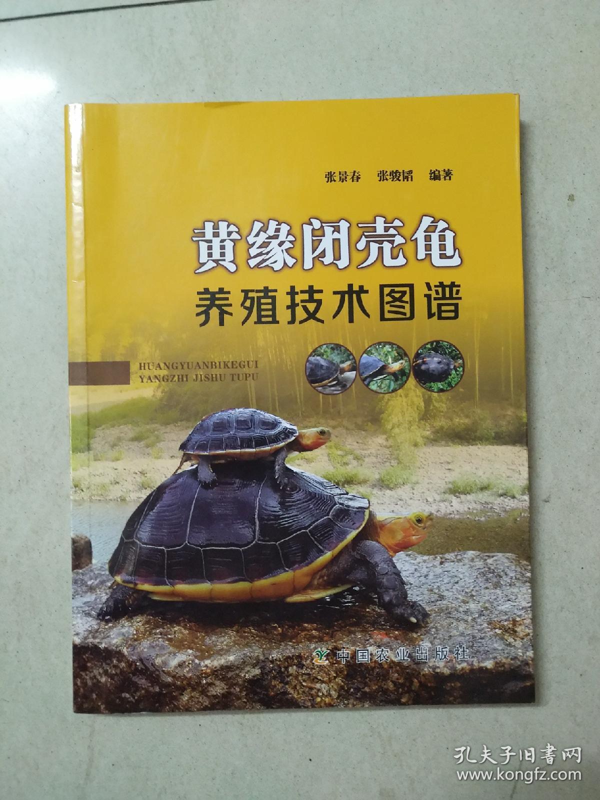 黄缘闭壳龟养殖技术图谱