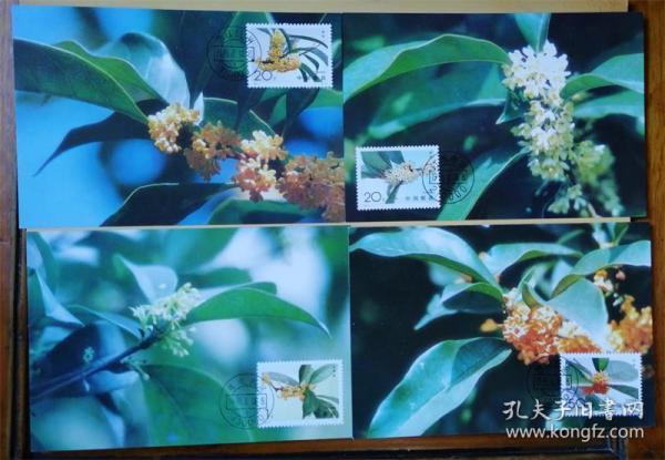 集邮总公司1995-6MC21桂花极限明信片