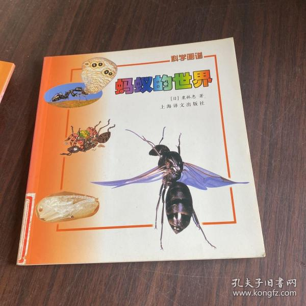 蚂蚁的世界