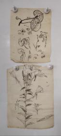 回流老字画手绘名家画稿二幅图软片D4703