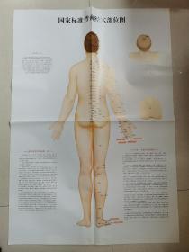 国家标准背面经穴部位图