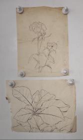回流老字画手绘名家画稿二幅图软片D4718