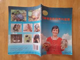 梁玉颜珍稀龟类的饲养与鉴赏