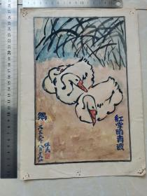 鹅-红掌踏青波  1956年 浔阳手绘