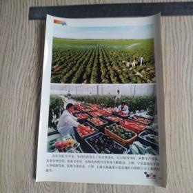 庆祝中华人民共和国建国五十周年新闻照片之38:宁夏盐池县喷灌。上沲东海蔬菜示范基地