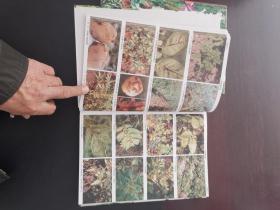 中国粮食作物经济作物药用植物病虫原色图鉴上下册第三版无公害新版