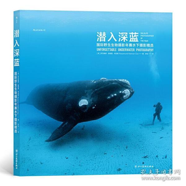 潜入深蓝:国际野生生物摄影年赛水下摄影精选