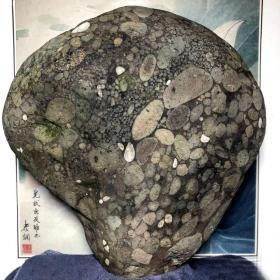 """陨石原石,""""月球经典球粒陨石""""原石,特大块头31.3斤重,极为稀有,""""强磁球粒陨石"""",极品罕有球粒型陨石,花纹独特,品相绝佳,质地细腻,色泽温润,不粗不干不燥,抚之宜手,万里挑一,极为罕见,""""大灵芝月球经典球粒陨石"""",气印熔流明显。包浆完美,陨石特征明显,极为稀有罕见,沁色自然,鬼斧神工,包浆温润,收藏之极品,可遇不可求的""""大灵芝球粒极品陨"""",可做镇馆之宝"""