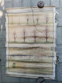 生活知识挂图:园艺组-果树整枝
