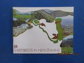 英文書  SHEEP  BREEDS  IN  NEW ZEALAND