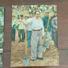 画页《毛主席在十三陵工地上参加劳动》3张
