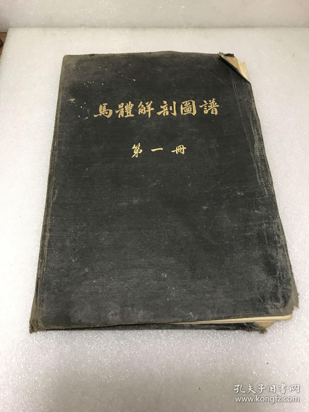 马体解剖图谱(第一,二册)