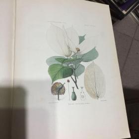 大卫植物志 二卷 plantae davidianae