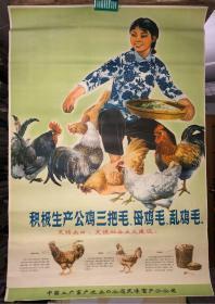 宣传画 积极生产公鸡三把毛 母鸡毛 乱鸡毛 中国土产畜产进出口公司天津畜产分公司 2开