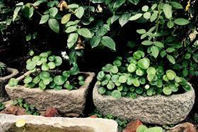 【青石水景石槽  】包老,品相好  可养鱼,植花草  大小适中  适合庭院  室内古风装饰 造景  (尺寸款式没有具体)可自选,单个售价260元,批发价优
