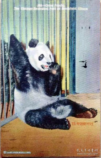 清代民国老明信片-国宝大熊猫(实寄)【店内更多】