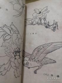 我怎样画工笔花鸟画