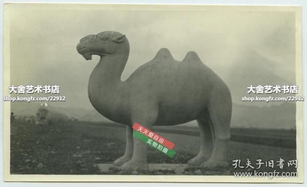 民国时期北京昌平十三陵神路上的石骆驼石雕雕像老照片B,13.9X8.3厘米