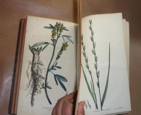 1825年 HORTUS GRAMINEUS WOBURNENSIS 西方植物学经典《草本植物图谱》珍贵全插图初版本 60张手工水彩上色版画插图 大开本全小牛皮豪华装桢 绝伦美艳