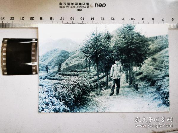 1959底片一张:采访皖南祁门县茶叶田的安徽画报记者、加2002冲洗片
