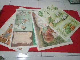 农业基础知识教学挂图,养兔《2开》4张。上海教育出版1958年