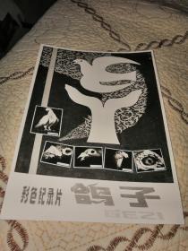 彩色纪录片:鸽子。海报照片一张(13cm×18cm)